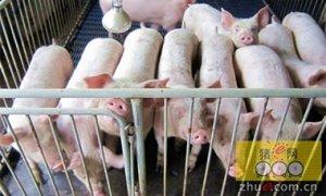 3月生猪存栏量同比减少近30%