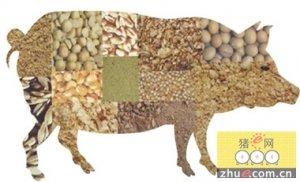 生猪依旧延续上涨格局,各地饲料价格陆续上涨