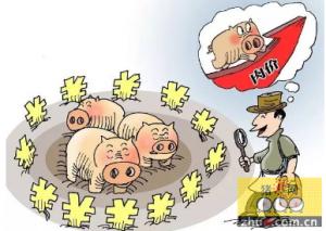 云南:永善荒山养猪鼓起村民腰包