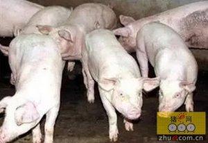养猪这么多年,您未必知道什么才是猪场亏损的重要原因?