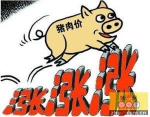 一季报进入尾声 生猪养殖企业交出漂亮成绩单