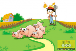 饲料成本回涨 养猪户的春天将结束?