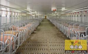 陕西规模养殖场5年增长近3倍 现代畜牧业发展取得进展
