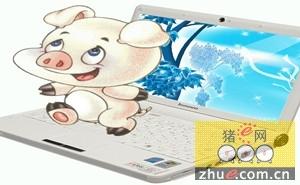 """湖南:临湘""""网络猪倌""""土法养猪洋法卖"""