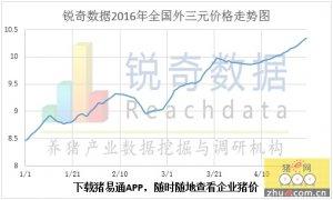 2016年4月29日猪评:大猪场提振,粤闽相继破11