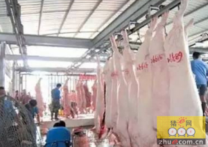 生猪加工企业高价收猪 来者不拒