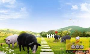山东潍坊市已创建完成省级畜牧旅游示范区8个
