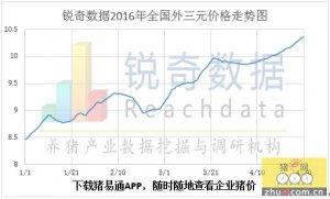 锐奇数据16年17周猪评:猪价整体上调 闽粤破11