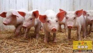 2016年第二季度猪价变动与山东地区仔猪价格 展望分析