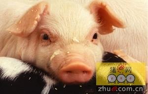 美国猪肉或将会影响到台湾养殖户的利润