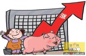 近期猪价依然延续上涨势头 逐步向21元/公