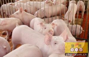 陕西:榆阳区抓产业促发展 全面实现畜牧业提质增效