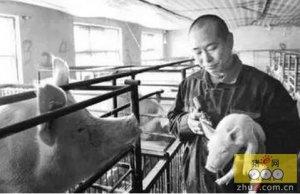 猪注射疫苗后眼睑肿胀,呼吸急促、全身发红怎么办?口蹄疫免疫过敏救治方案