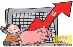 二季度猪价居高难下 猪价下跌!再等等