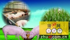 辽宁阜新:转变生产方式 加快畜牧业转型升级