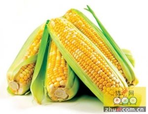 政策控盘大局已定,玉米拍卖重启亦无需慌乱