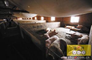 云南昆明空港区年出栏10万头猪场被下令整改