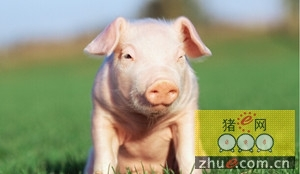 跨学科途径为生猪产业应对挑战提供更加有效的手段