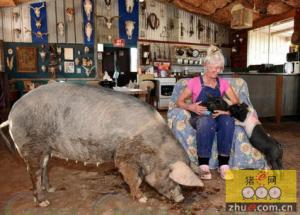 澳洲女子放弃城市生活跟50多头猪同吃同住