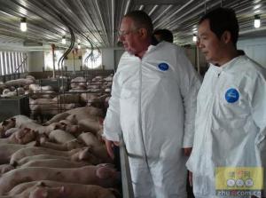 猪价飞上天,养猪企业和养殖户该如何做?