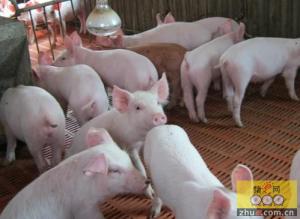 生猪养殖中要避免的几大浪费