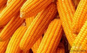 你知道吗?5月下旬注定成为今年玉米市场