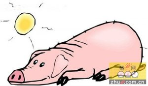 山东养殖户手握猪粪脱水处理设备不惧查污染