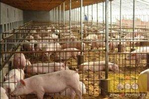 大北农:猪联网管理的商品猪达1600万头