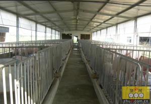 养猪场应该如何选购设备?