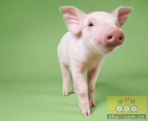 云南大理州着力推进生猪产业持续健康发展