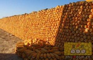 预计华北玉米供应缺口为500万吨