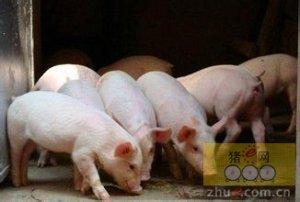 黑龙江和吉林地区母猪补栏程度显著高于全国其他地区