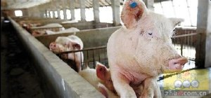 国家统计局:猪肉价格涨势趋缓
