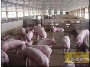 中小型规模猪场面临的风险有哪些?