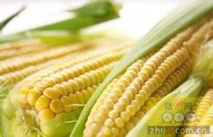 供需预期好转促使玉米价格反弹