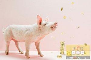 猪市会维持在一个较高的水平 猪价大涨大跌均不会出现