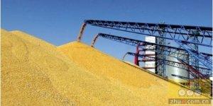 巴西玉米价格成为畜牧业经营者的困扰
