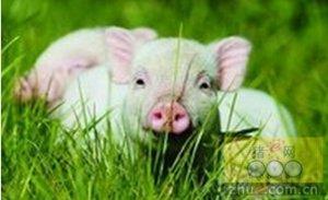 浙江衢州:猪要养,钱要赚,生态不能坏