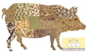 饲料涨,猪价跌:压栏或补栏?全价或浓缩