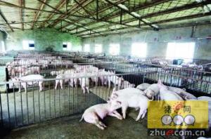 农业部公告 第2413号(胶东半岛免疫区通过国家评估验收)