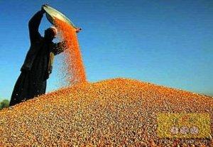节后豆粕暴涨 中间商短期应做好风险防范