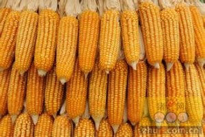 玉米大豆市场去政策化已成大趋势