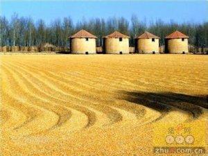 6月14日超期储存进口美国玉米定向竞价销