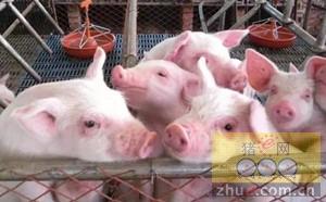 再签500万头生猪养殖项目 温氏加速云南布局