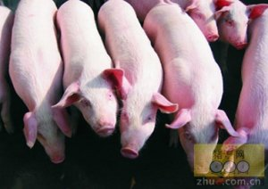 百万头生猪生态养殖项目落地寿阳