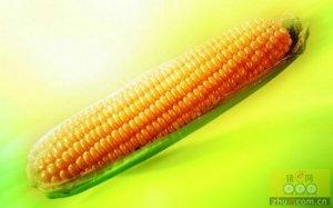 玉米进入双拍节奏 后期粮源供给趋稳定