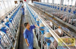 长春出台畜牧企业安全生产标准化建设规范
