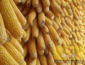 6月14-15日超期及�t�囤储存玉米拍卖成交