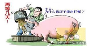 """养头猪利润600元肉价涨个不停 济南不少养殖户""""惜售"""""""