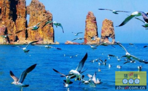 山东胶东半岛成首个免疫无高致病性禽流感区